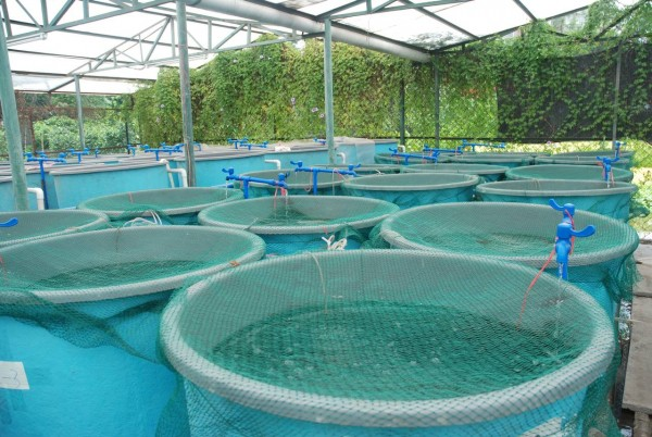 Kings Infra & NEC Corp introduce proof of concept for Precision Aquaculture